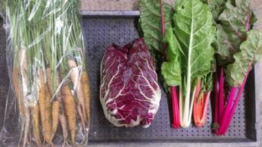 イタリア野菜の田倉ファーム