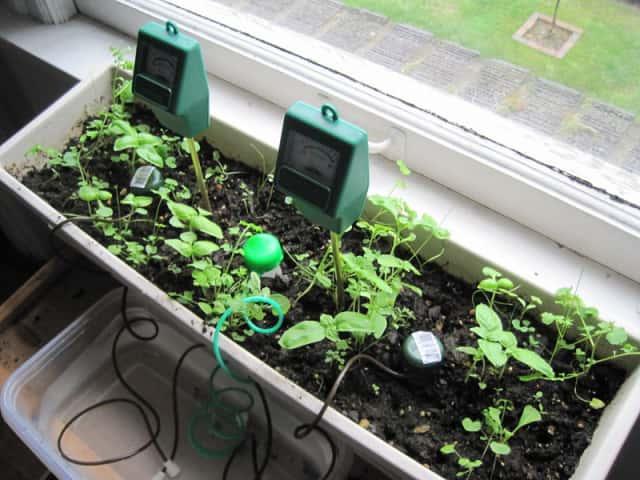 プランターで使用中の土壌水分計
