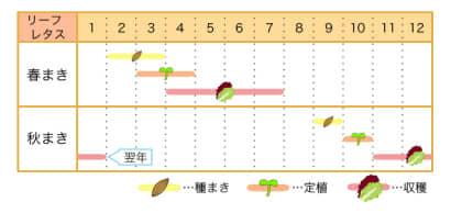 家庭菜園カレンダー リーフレタス