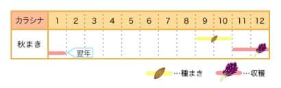 家庭菜園カレンダー カラシナ