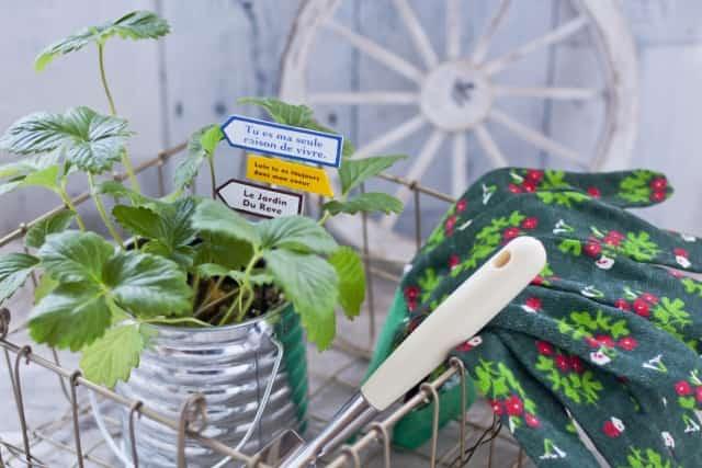 イチゴの苗と手袋とスコップ