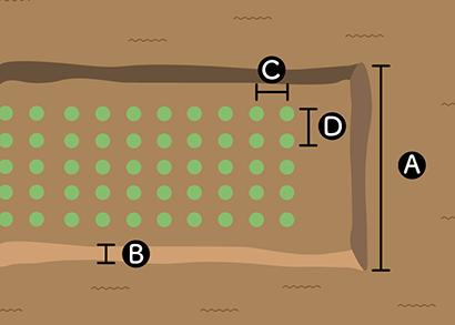 ホウレンソウの畝サイズ