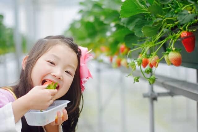 いちごを食べる女の子