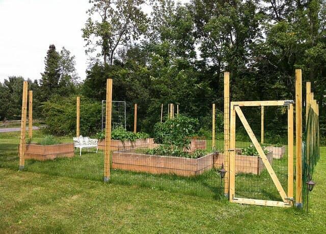 フェンスで囲われた菜園