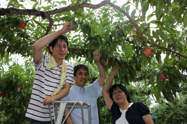 桃狩りを楽しむ人たち