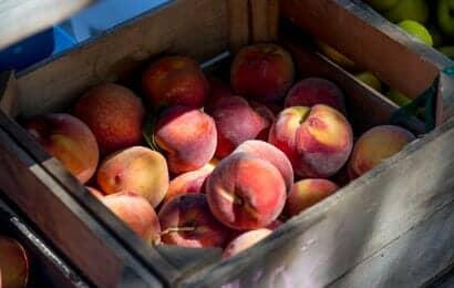 収穫した桃