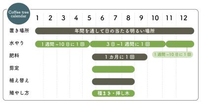 コーヒーの木 栽培カレンダー