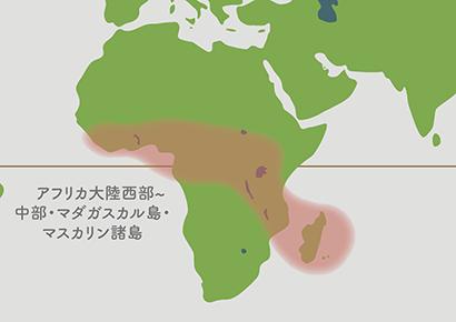 コーヒーの木 原産地地図