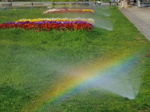 スプリンクラーの散水と虹