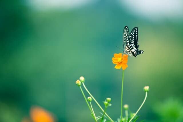 【おすすめ38選】昆虫図鑑をご紹介!大人向けやポケット版、オンライン版も