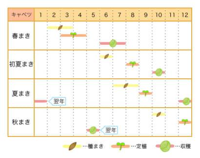 栽培カレンダー キャベツ