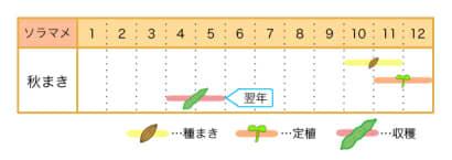 ソラマメの栽培カレンダー