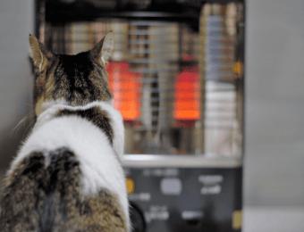 石油ストーブの前にいる猫
