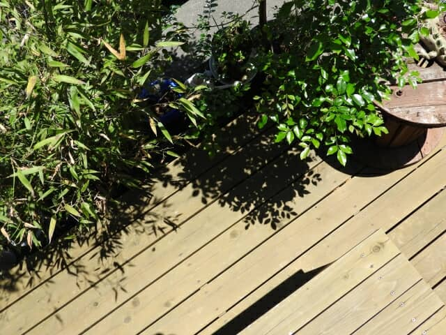 ウッドデッキと庭木