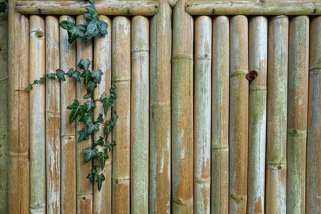 天然竹の垣根の美しさ