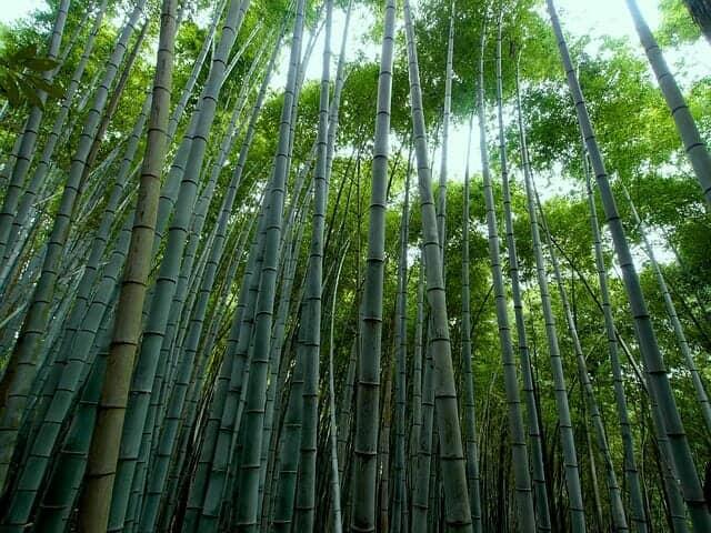 竹酢液は竹からできる