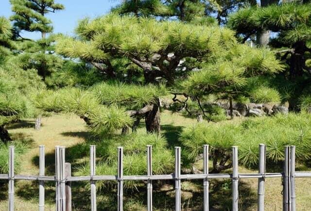 四つ目垣と日本の庭