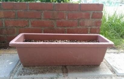 プランターなどの土に菊芋を保存