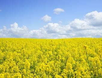 油粕の肥料としての効果は?