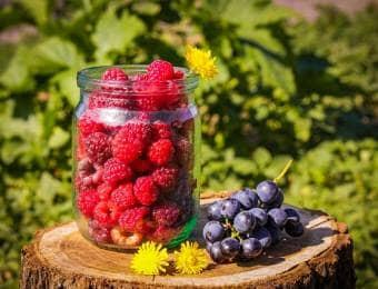 家庭菜園でラズベリーを育てて採れたてを食べよう!