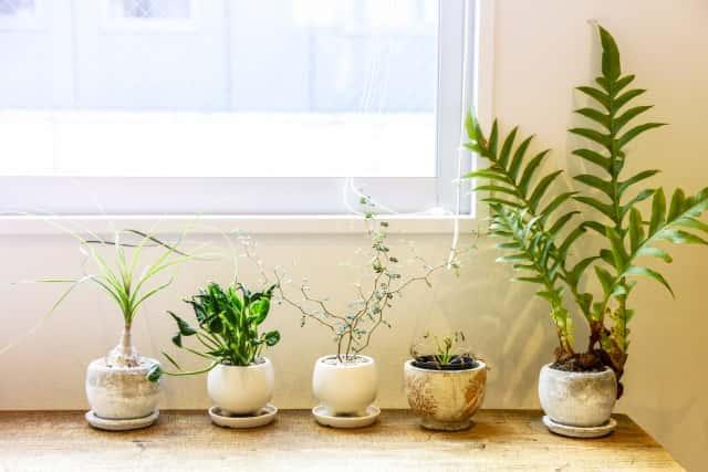 陶器の植木鉢の種類