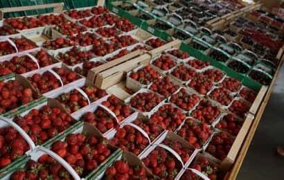 小売店に並ぶイチゴ