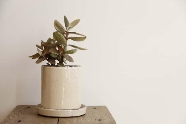 置くだけでおしゃれな陶器の植木鉢