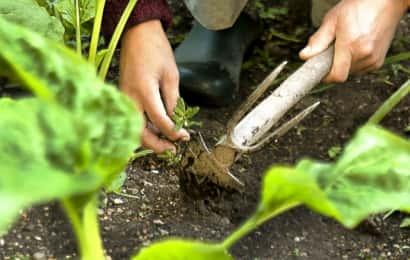 畑の土を掘る