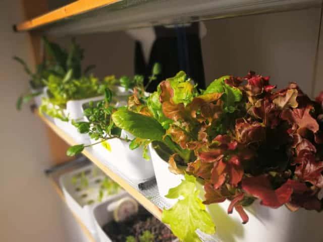 自作水耕栽培器の並んだ棚