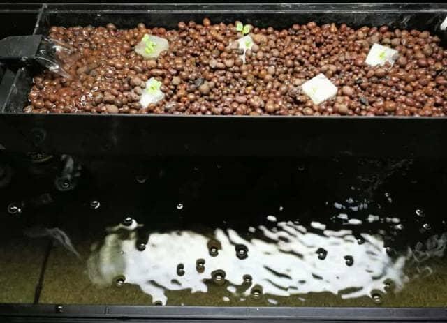 水槽の上部にセットされた植物の培地