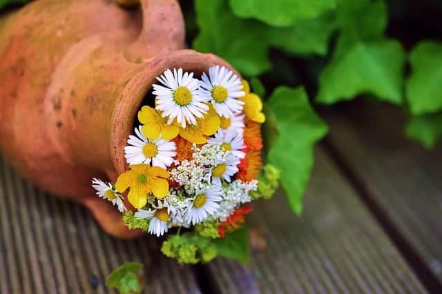 素焼き鉢と花