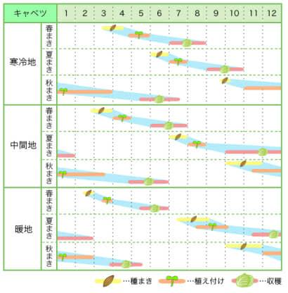 キャベツ 新規就農レッスン 栽培カレンダー