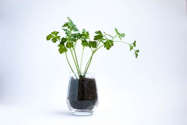 使い方 ハイドロ ボール 話題のハイドロカルチャーって何?メリットと注意点、おすすめ植物