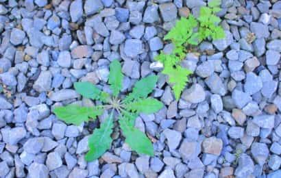 砂利と雑草