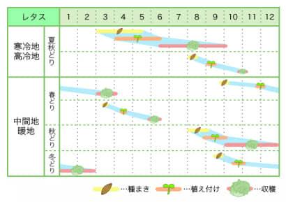 レタス 新規就農レッスン 栽培カレンダー