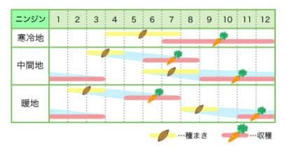 ニンジン 新規就農レッスン 栽培カレンダー