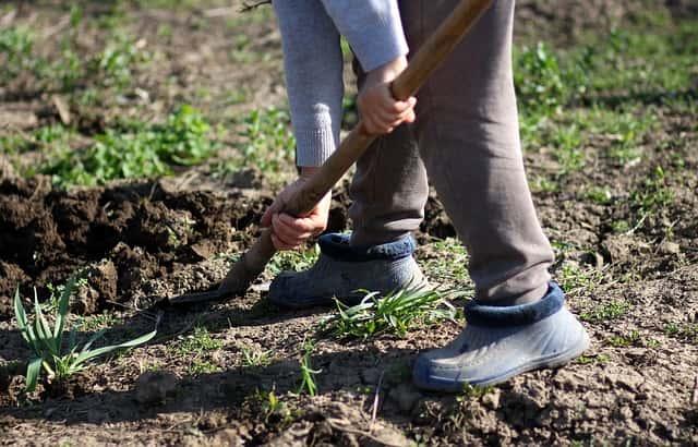 土を掘る人