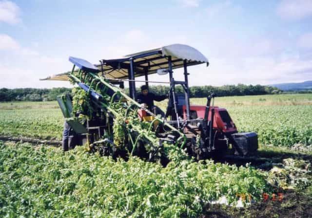 農機を使用した大根の収穫