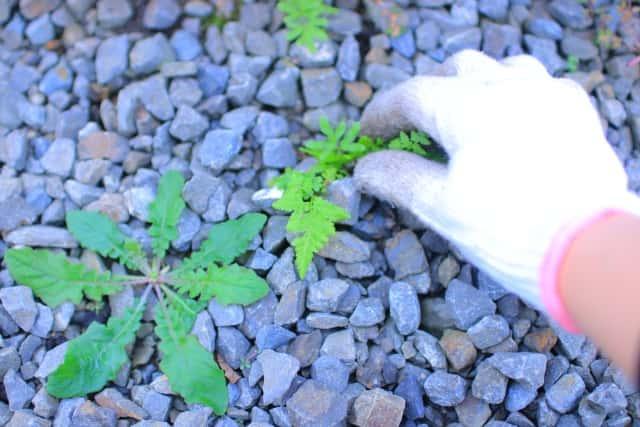 砂利の雑草を抜いている手