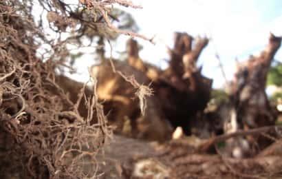 複雑に絡み合う木の根っこ
