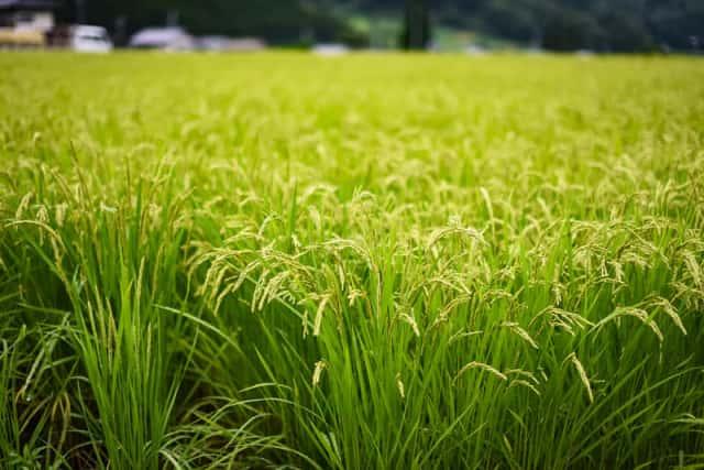 農業、二十四節気