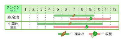 新規就農レッスン 栽培カレンダー チンゲンサイ