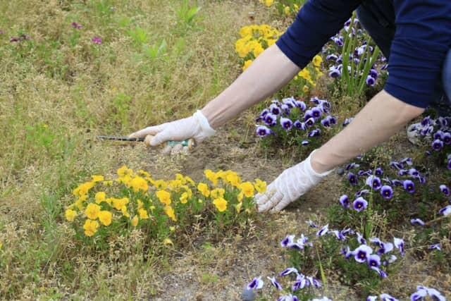花を鎌で切る様子