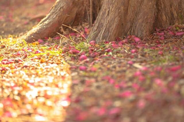 木の根と地面
