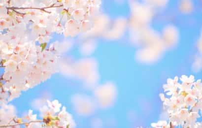 桜、さくらはじめてひらく 、七十二候