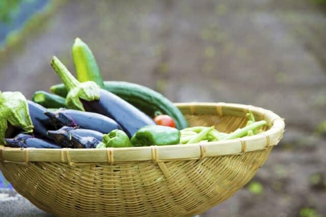 収穫したナス、トマト、ピーマンなど