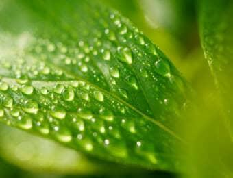 葉、雫、ハウス栽培の湿度管理