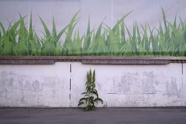 壁際の雑草