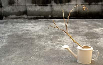 枯れた枝とジョウロ