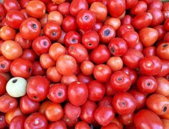 尻ぐされ トマト
